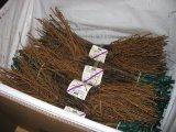 am Ende des Rebschuljahres pflanzfertig verpackt